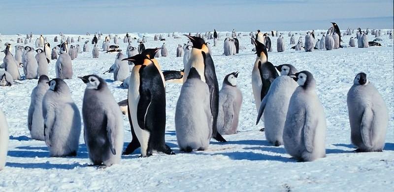 Google Penguin 4.0 est là !